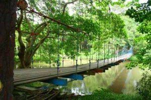 daftar-pariwisata-rekreasi-hutan-di-indonesia