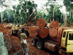 林業 インドネシア